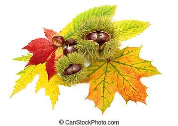 outono, castanhas, folhas, arranjo