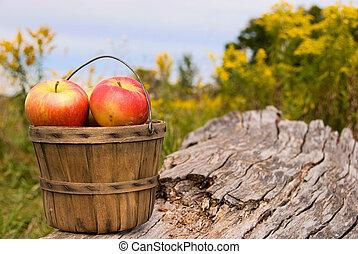 outono, cesta, maçãs