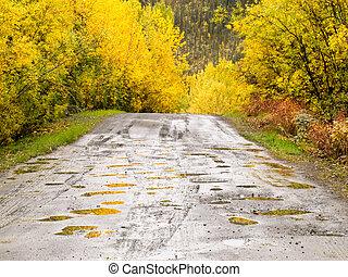 outono, chuva, ligado, rural, estrada sujeira, thru, amarela, salgueiros
