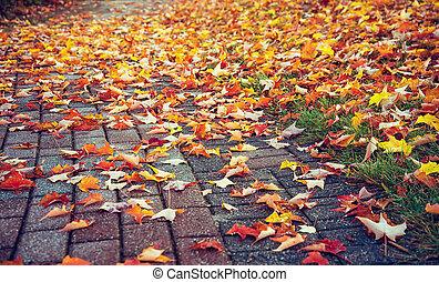 outono, coberto, folhas, coloridos, passagem