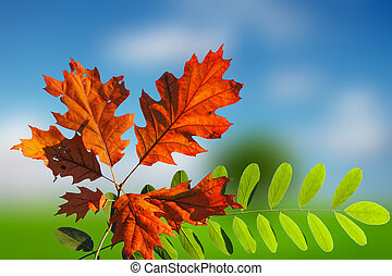 outono, coloridos