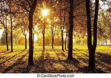 outono, concept., park., pôr do sol, outono