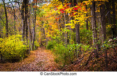 outono, cores, ao longo, um, rastro, em, nixon, parque, perto, york, pennsylvania.