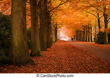 outono, cores