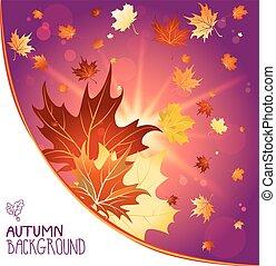outono, decoração, folhas, maple