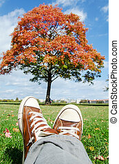 outono, desfrutando, parque, vista