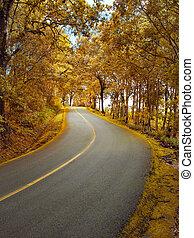 outono, direção, floresta, estrada