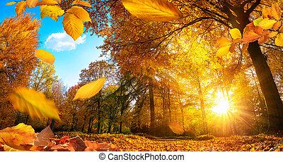 outono, dourado, folhas, cena, queda