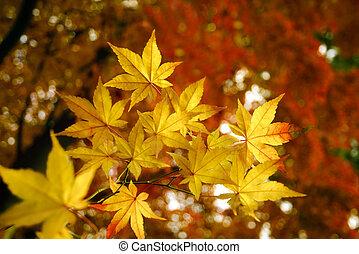 outono, dourado