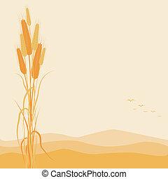 outono, dourado, trigo, fundo, orelhas