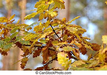 outono, em, floresta