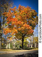 outono, em, princeton, universidade, 2