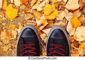 outono, estação, jovem, pés, sneakers, acima, homem