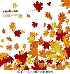 outono, experiência., folhas, branca