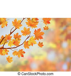 outono, experiência., folhas, coloridos