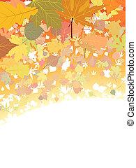 outono, experiência., folhas