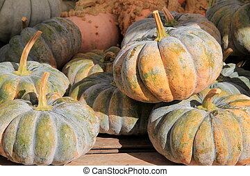 outono, exposição, de, coloridos, abóboras