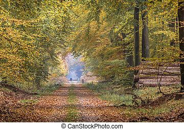 outono, faia, pista, árvores, towering