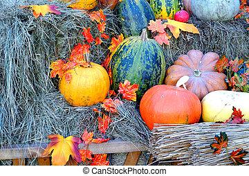 Outono, feno, folhas, abóboras