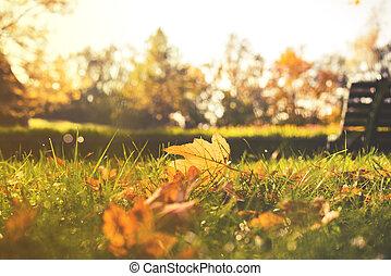 outono, fim, folhas, park., cima