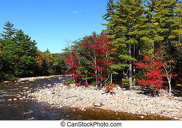 outono, floresta