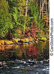 outono, floresta, e, costa lago