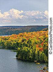 outono, floresta, e, lago
