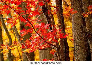 outono, floresta, fundo