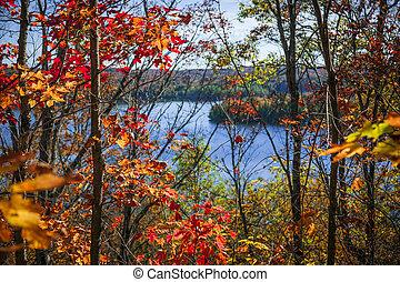 outono, floresta, lago