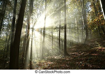 outono, floresta nebulosa