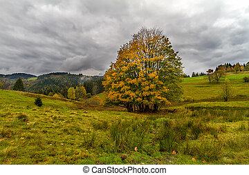 outono, floresta preta, árvore, alemanha