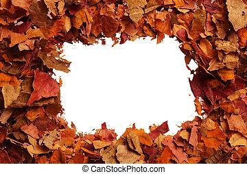Outono, folhas