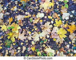 outono, fundo, -, caído sai, chão
