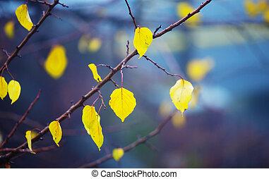 outono, fundo, com, amarelo sai