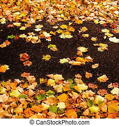 outono, fundo, com, leaves.