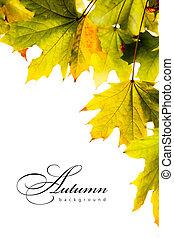 outono, fundo, maple sai