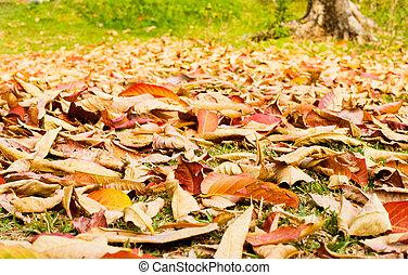 outono, gramado, folhas, caído