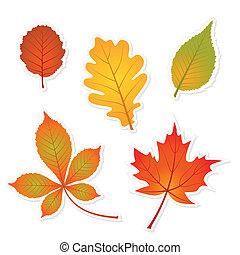 outono, jogo, de, folhas, adesivos, com, sombras, -,...