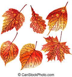 outono, jogo, leaves., coloridos