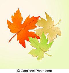 outono, leaves., maple