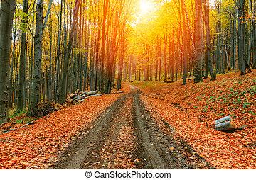outono, luminoso, floresta, coloridos