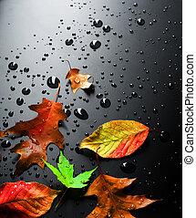 outono, luminoso, folhas, molhados