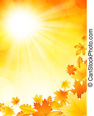 outono, luminoso, fundo