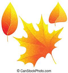 outono, luminoso, leaves.