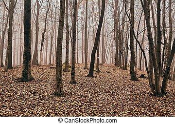 outono, madeiras, árvores