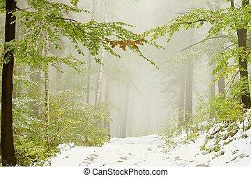 outono, madeiras, coberto, com, neve