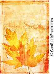 outono, maple, grunge