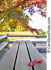outono, maple japonês, folhas, ligado, madeira, banco
