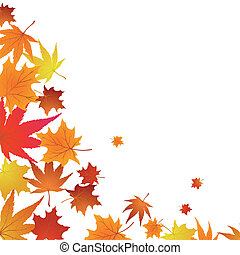 outono, maples
