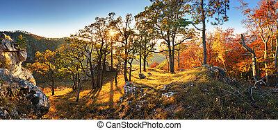 outono, montanha, pôr do sol, floresta, sol